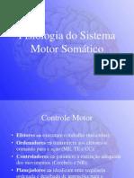 Neurofisiologia Sistema Motor Somatico