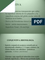 Cornea y Conjuntiva-1