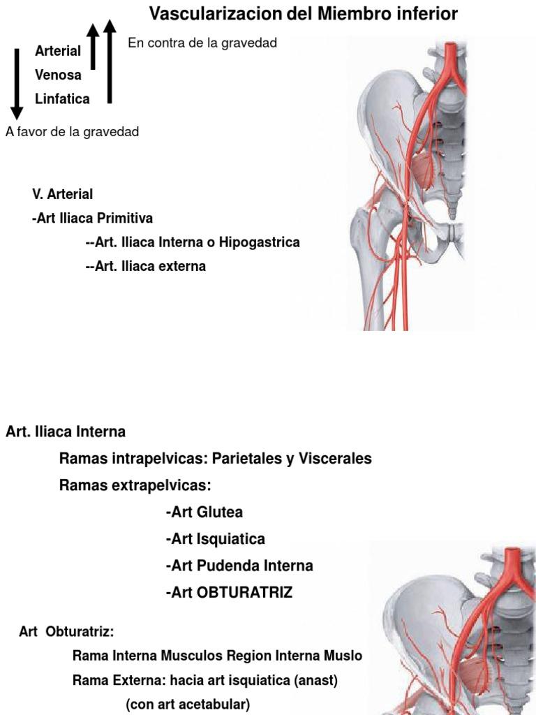 Fantastisch A. Iliaca Communis Anatomie Galerie - Anatomie Von ...