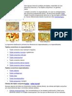 Tejido conjuntivo.docx