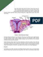kehamilan-ektopik.pdf