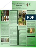 walnut micropropagation in liquid culture.pdf