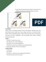 Trichiasis Print