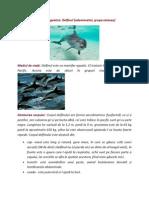 Delfin- referat biologie.docx