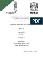 Anatomia Practica Glandulas