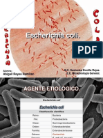 Escherichia Coli I