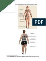 tiparul de baza a bluzei.pdf
