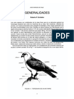 Aves Rapaces de Chile Generalidades