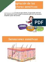 Adaptación de los receptores sensitivos