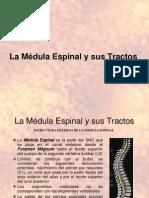 _clase1 Freda Medula (1)