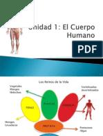 Power Cuerpo Humano w93