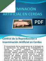 Inseminacion Artificial Cerdas 090728081030 Phpapp02