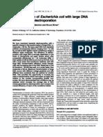 Large DNA transformation.pdf