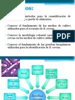 Práctica XIII