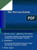 anatomy Presentation ho 7(nervous system)