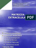 Matrice extracelulara.ppt