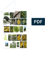 reference pohon cassia sp.pdf