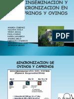 Insemizacion Sincronizacion Ovinos Caprinos Avila, Arias, Jimenez, Cangrejo, Bravo, Etc.