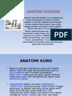 anatomi-manusia