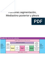 Pulmones segmentación, Mediastino posterior y pleura