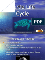info kiosk presentation-turtles life cycle