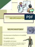 esquema_neuroanatomia