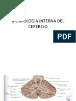Morfologia Interna Del Cerebelo