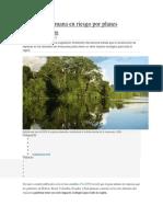 Amazonía peruana en riesgo por planes hidroeléctricos