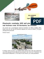 Plantação continha 200 mil pés de maconha em terreno com 10 hectares, na Paraíba
