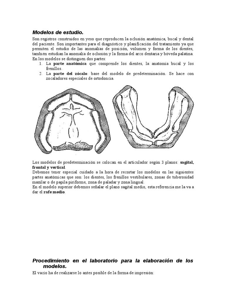 Fantástico Anatomía Tuberosidad Del Maxilar Colección de Imágenes ...