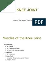 knee-muscle.pdfkjhdfks