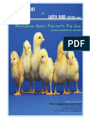 Layer Bird Project Report For 40000 eggs per day | Chicken