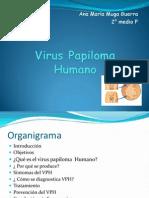 Virus k