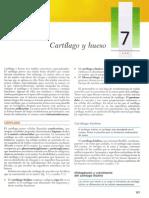 Cartilago y Hueso-gartner