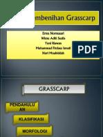 PPT Kelompok Grass Carp