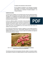 Antibiotic resistance in the environment MODIFICATED.docx