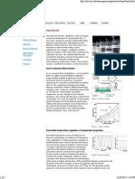 NanoEngineering_ Research.pdf