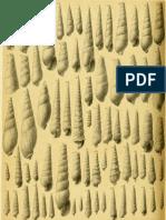 I molluschi dei terreni terziari del Piemonte e della Liguria; F. Sacco, 1891 - PARTE 10 - Paleontologia Malacologia - Conchiglie Fossili del Pliocene e Pleistocene
