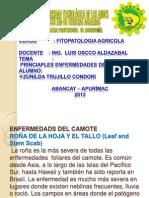 EXPO CAMOTE.pptx