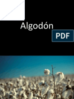 Algodon Completo