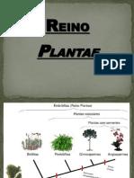 6a Evolução das plantas