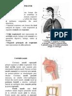 curs5 Anatomia omului.ppt