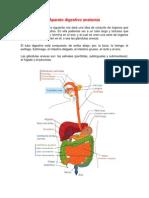 Aparato digestivo anatomía completo