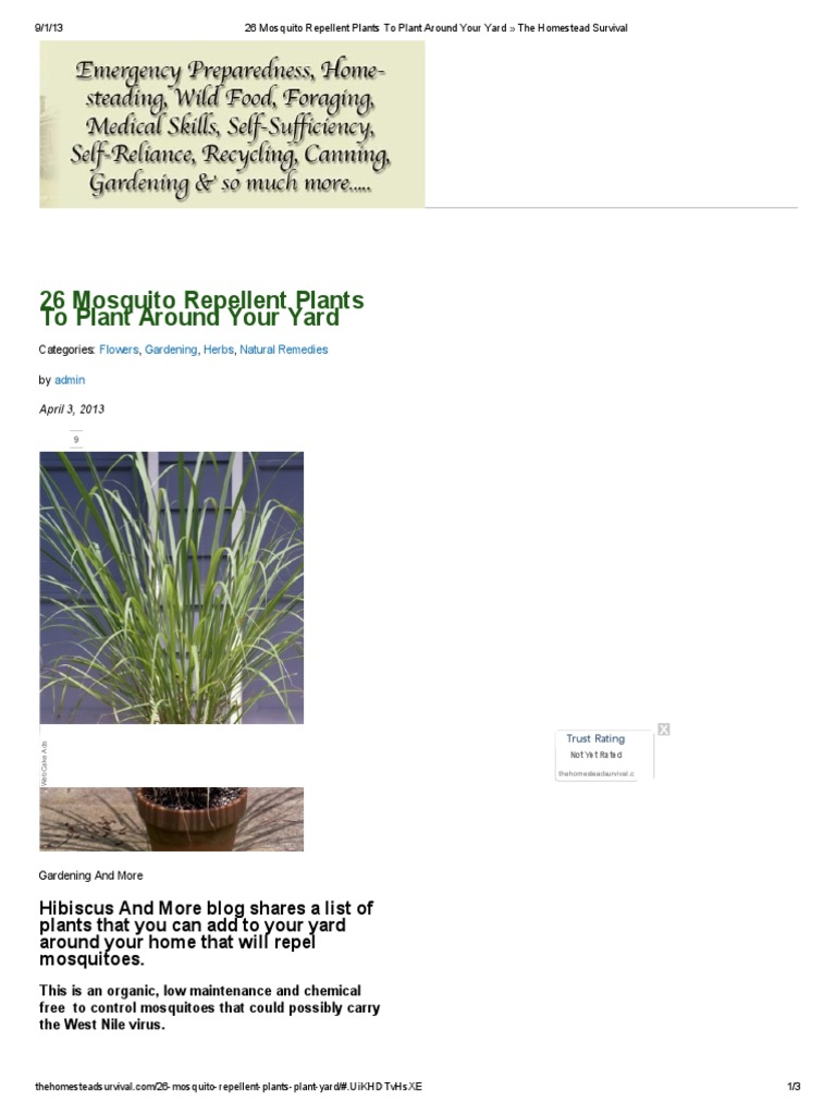 26 Mosquito Repellent Plants To Plant Around Your Yard The – Mosquito Repellent Plants for Your Garden