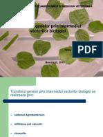 Transferul Genelor Prin Intermediul Vectorilor Biologici Toma Rodica