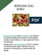ESCHERICHIA COLI EHEC.ppbjujt