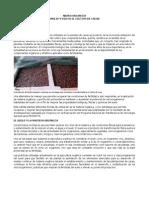 Ao 2007. Informes Proyectos-Rankin Publicaciones PDF Abono Organico