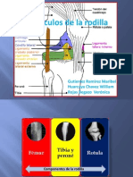 anatoma de la rodilla final.ppt