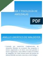 Amigdalitis Completo