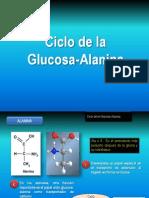 cicloglucosa-alanina